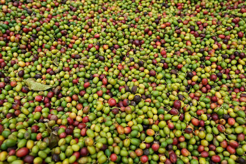 what-is-arabica-coffee-beans